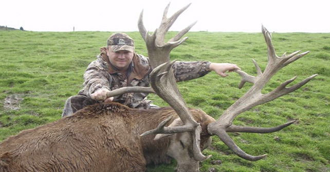 Red Stag Hunts in Texas