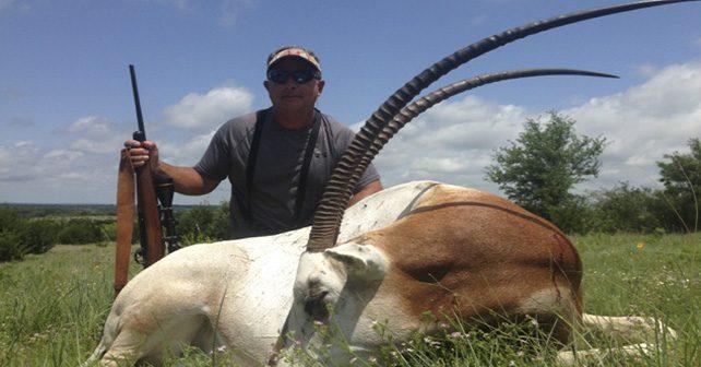 Scimitar-horned Oryx Hunting